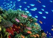 Дайвинг в Египте (Красное море), подводный мир Египта