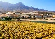 Кактусы и фермы около La Aldea (остров Гран-Канария)