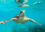 Отдых на Карибах из Балашихи, отдых на Карибских островах цены (Балашиха)