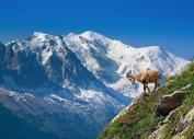 Горные туры в Альпы из Балашихи